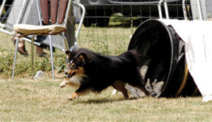 4pattes agility arnas chien