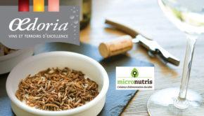 intro oedoria liergues insectes commestibles micronutris bn323